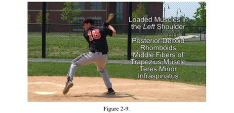 muscles used to swing a bat how to swing a baseball bat backward rotation of spine