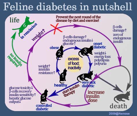diabetes diagram carbon monoxide ford owners association feoa