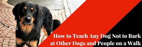 how to your not to bark on walks how to teach any not to bark at other dogs and on a walk