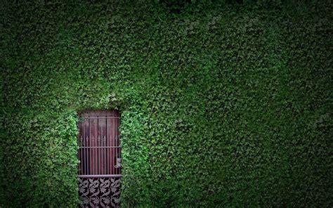 vine wallpaper for walls vines
