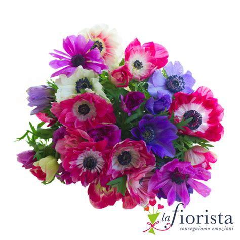 fiori anemoni foto foto anemoni fiori fiori idea immagine