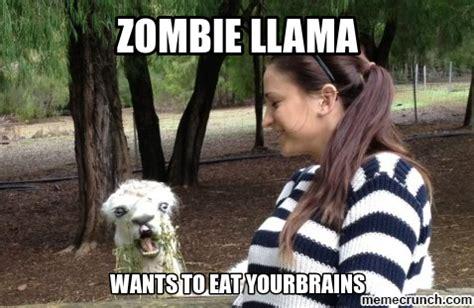 Funny Llama Memes - llama meme