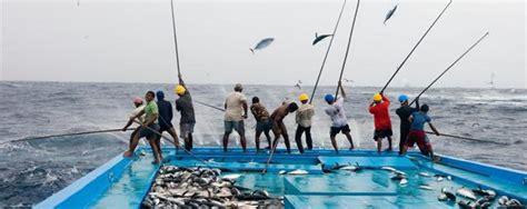 Alat Pancing Ikan Tuna teknologi penangkapan ikan tuna pbn