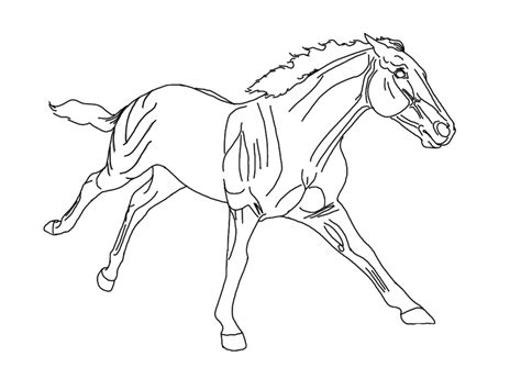 breyer coloring contest 2014 coloring pages