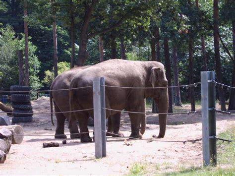 Zoologischer Garten Berlin Zooschule by Zoos Und Naturkundemuseen In Berlin Und Brandenburg