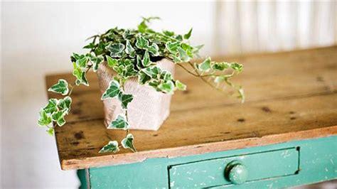 easiest indoor houseplants  wont die