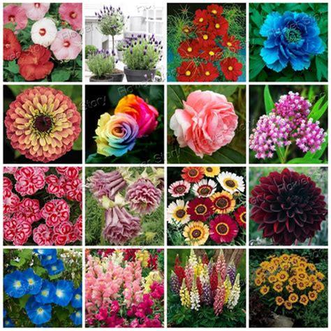 pretty garden flowers 2900pcs flower seeds 16 varieties packed seperate easy to