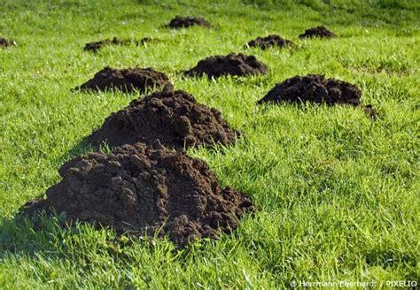 Rasen Ohne Mãƒâ Hen Rasen Richtig Pflegen Rasen Anlegen In 6 Schritten Obi