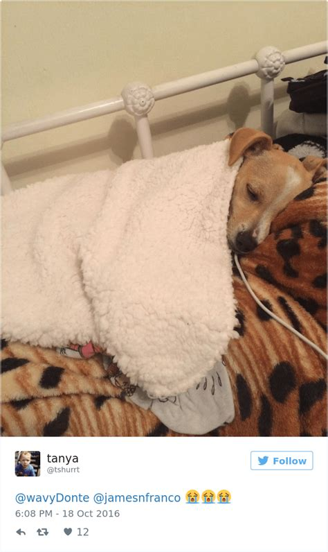 do dogs dreams do dogs experts say dogs about their humans and got real emotional