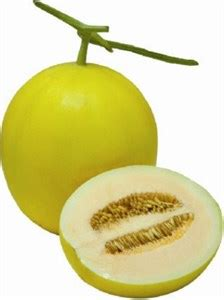 F1 Canary Sed gardening vegetable seeds melon yellow f1 sweet master for rs 50 00 sky seeds store