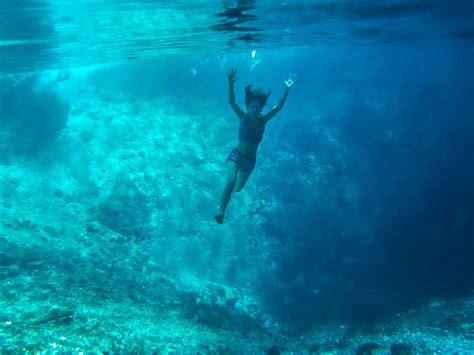 Marine 35gr Makanan Ikan Laut Free free images sea fish swimming reef freediving