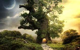 fantasy houses fantasy house tree wallpapers pictures