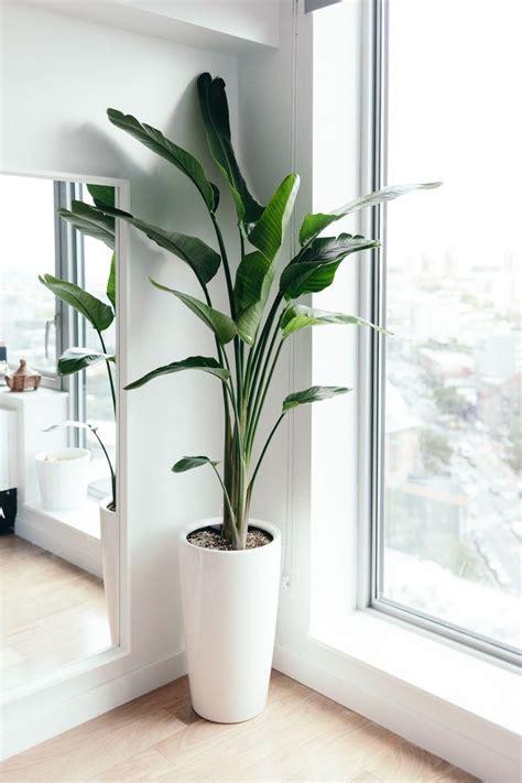 home interior plants best 25 artificial plants ideas on artificial
