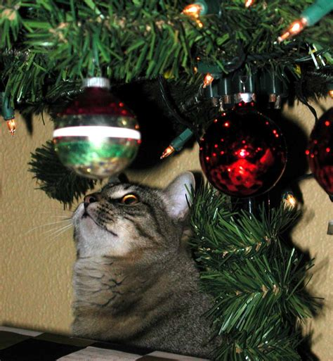 cat and christmas tree safety during the holidays