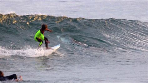 great white shark photobombs  year  boy  surfing
