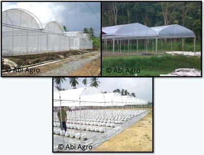 Plastik Rumah Lindungan Hujan tempe aping