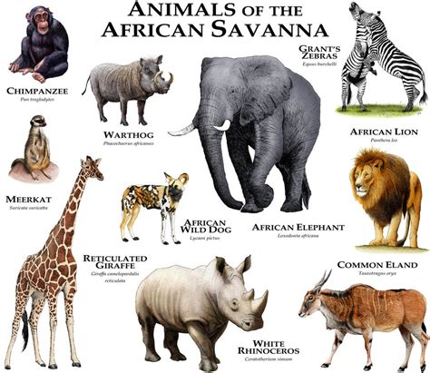 american zoo a sociological safari books animals of the savanna by rogerdhall on deviantart