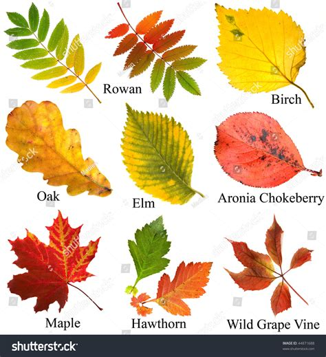 Leave Set collection set beautiful colored autumn leaves stock photo