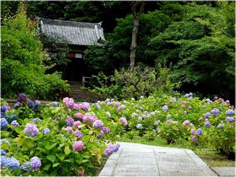 amazon garden