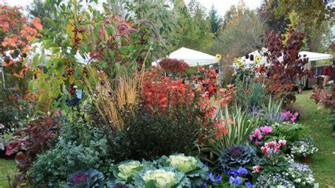 piante sempre fiorite le piante da giardino sempreverdi