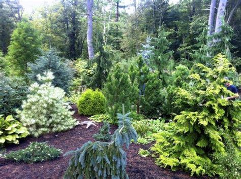 garden tours ma dwarf conifers conifer landscape