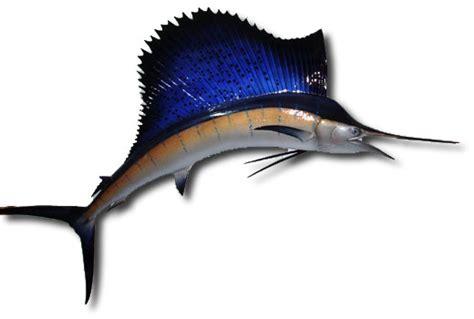 Meter Squared To Feet Squared two sided sailfish saltwater fish mount sailfish fish