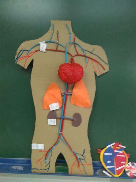 como hacer una maqueta del sistema circulatorio maquetas del aparato circulatorio imagui