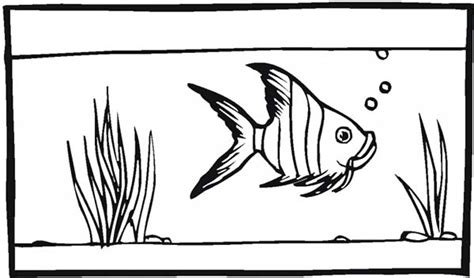 fish tank  angel fish coloring page netart
