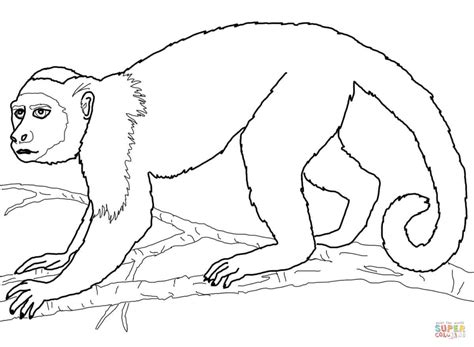 Capuchin Monkey Coloring Pages | capuchin monkey coloring online super coloring