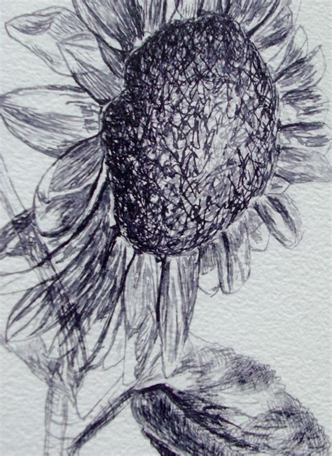 doodle pen limited sunflower original pen and ink drawing black and white