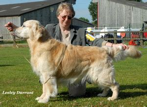 stormerick golden retrievers ch show 2011 the golden retriever club
