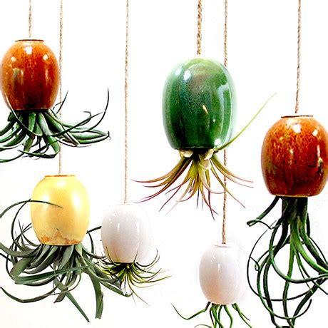 hanging house plants hanging house plants home makeover pinterest