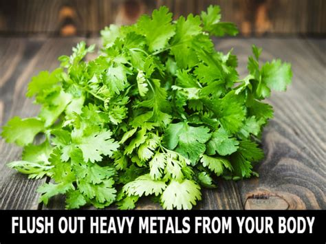 Astaxanthin Detox Heavy Metals Fro Brain by How To Flush Out Heavy Metals From Your Boldsky