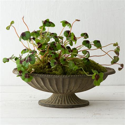 Pedestal Planters For Indoor by Aged Iron Pedestal Bowl 14 Quot Terrain