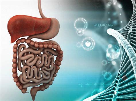 bakterien im stuhl mikrobiologie analyse pilze und bakterien institut f 252 r
