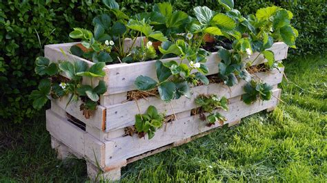 How To Make A Strawberry Planter Out Of A Pallet by How To Make A Better Strawberry Pallet Planter
