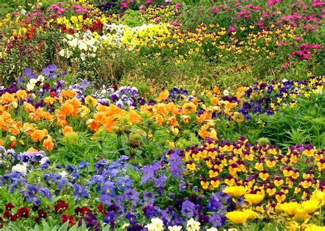 indian garden flowers  hamilton gardens  zealand