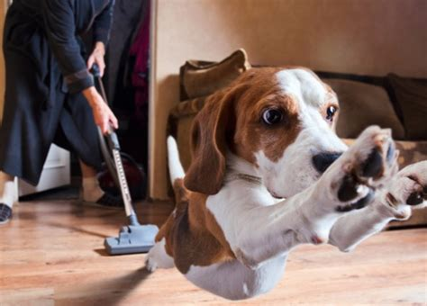 cleaning dog hair from couch pet hair vacuum cleaner could cleaning your home be fun