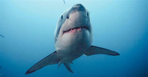 Tlf 45 Shark clever buoys shark detecting tech to patrol aussie beaches
