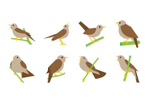nightingale vector   vectors clipart