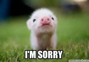 I Am Sorry Meme - baby pig i m sorry