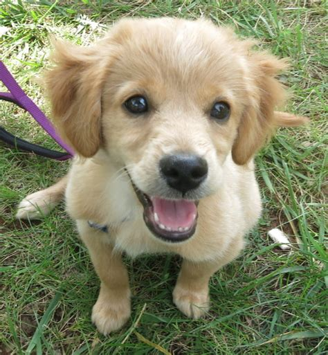 SPCA of Northern Virginia: Dogs Available For Adoption Lost Dog Rescue Arlington