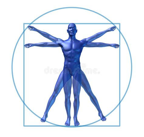 quadrilaterals in the human body newhairstylesformen2014 com human body circle human diagram vitruvian man isolated