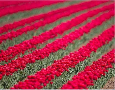 colori dei fiori compagnia delle quot mille colori dei fiori quot