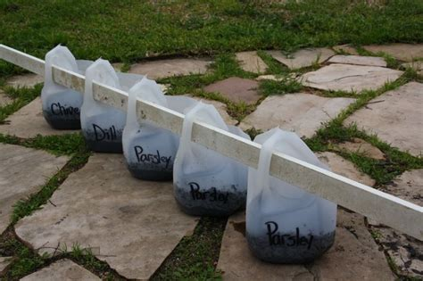 Milk Jug Planters by Hanging Planters With Milk Jugs Garden