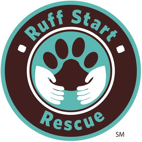 how to start a rescue 4 your pets meet ruff start rescue s azure davis 171 wcco cbs minnesota