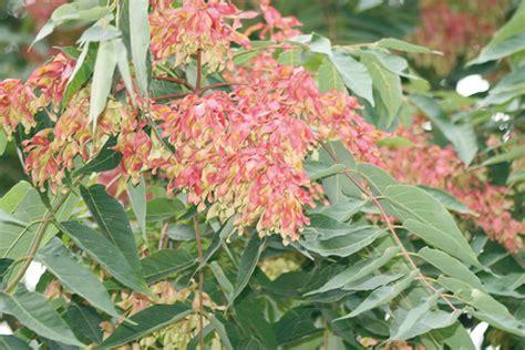 elenco fiori e piante dalla a alla z fiori dalla a alla z blackhairstylecuts