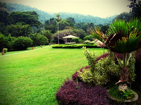 Penang An Amazing Island Situated In Malaysia Impressive Penang Botanical Garden