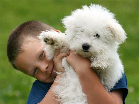 perros con personas perros que ayudan a sonre 237 r terapia asistida con perros y