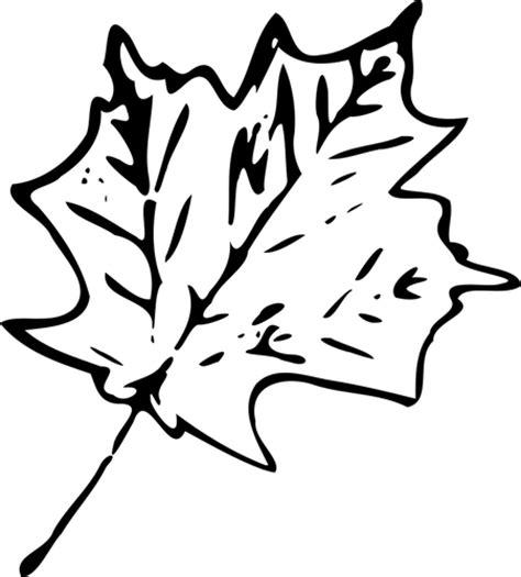 Mapel Putih gambar daun hitam putih clipart best
